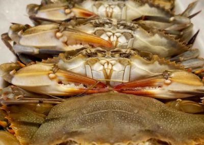 odonnells-market-what-we-offer-seafood-shellfish-softshell-crabs